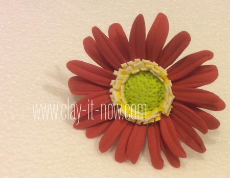 gerbera daisy flower without mold